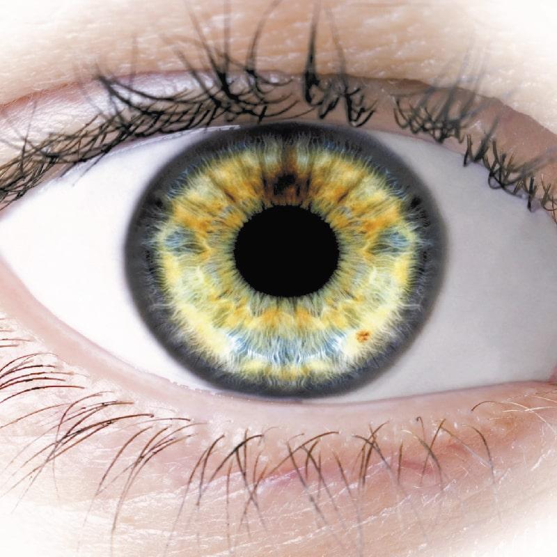 eye retina